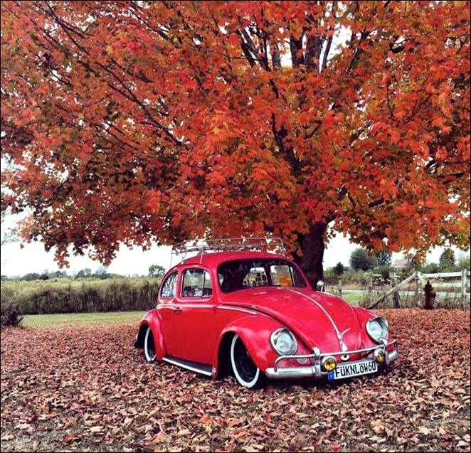 Danny Harrell's 1960 Beetle Project